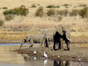 """""""C'était la première fois que je voyais des éléphants d'aussi près et surtout, en liberté!"""". Photo: Guillaume Surmont, Afrique du Sud"""